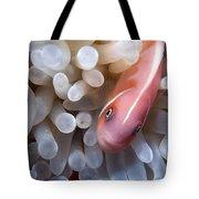 Clownfish 12 Tote Bag