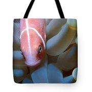 Clownfish 16 Tote Bag