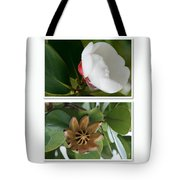 Clusia Rosea - Clusia Major - Autograph Tree - Maui Hawaii Tote Bag by Sharon Mau
