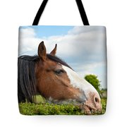Clydesdale Horse Munching Tote Bag