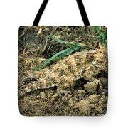 Coast Horned Lizard Tote Bag