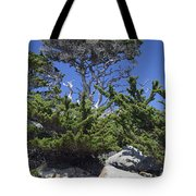 Coastal Trees In California's Point Lobos State Natural Reserve Tote Bag by Bruce Gourley