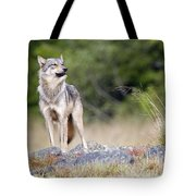 Coastal Wolf Tote Bag