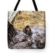 Cochin Hen And Chick Tote Bag