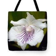 Cochleanthes Aromatica Menehune Tote Bag