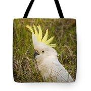 Cockatoo Portrait  Tote Bag