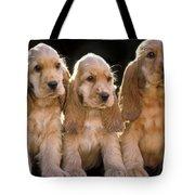 Cocker Spaniel Puppies Tote Bag