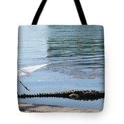 Crocodile In Cancun Tote Bag