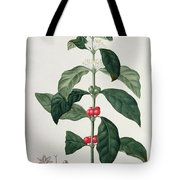 Coffea Arabica From Phytographie Tote Bag