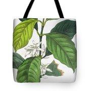 Coffea Arabica Tote Bag