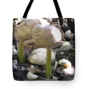 Coffee Beans Soldier  Stage One Of The Seed Giving Birth To A Cash Crop Plant Tree In Costa Rica Tote Bag