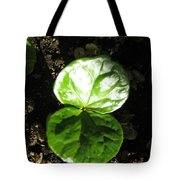 Coffee Plant The Shiny Thick Green Butterfly Look Plant Gives The Great Promise Of A Cash Crop To Th Tote Bag