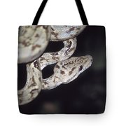 Coiled And Waiting Tote Bag