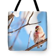 Cold Redpoll Tote Bag