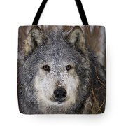 Cold Stare Tote Bag