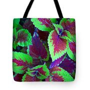 Coleus Color Tote Bag