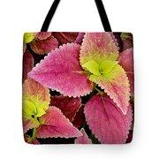 Coleus Colorfulius Tote Bag