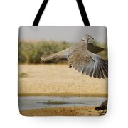 Collared Dove  Tote Bag