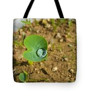 Colocasia Antiquorum Seedling And Water Droplet Tote Bag