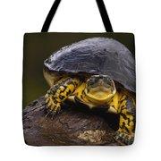 Colombian Wood Turtle Amazon Ecuador Tote Bag