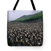 Colony Of Royal Penguin Eudyptes Tote Bag