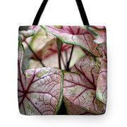 Colorful Coleous Tote Bag