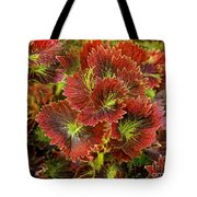 Colorful Coleus Tote Bag