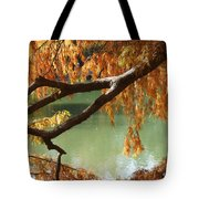Colorful Fall Bald Cypress Tote Bag