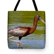 Colorful Glossy Ibis Tote Bag