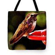 Colorful Juvenile Humingbird Tote Bag