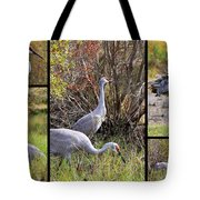 Colorful Sandhill Crane Collage Tote Bag