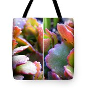 Colorful Succulents In Stereo Tote Bag