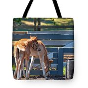 Colts At Play Tote Bag