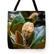columnar Southern magnolia Tote Bag