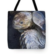 Coming Out Of Shell Tote Bag