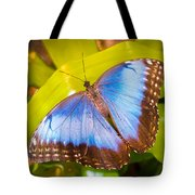 Common Blue Morpho Tote Bag
