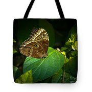 Common Blue Morpho Moth Tote Bag