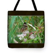 Common Buckeye Butterfly - Junonia Coenia Tote Bag