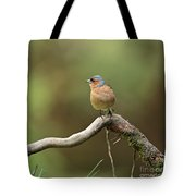 Common Chaffinch Tote Bag