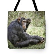 Common Chimpanzee  Pan Troglodytes Tote Bag
