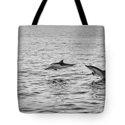 Common Dolphins Leaping. Tote Bag