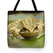 Common Frog Tote Bag