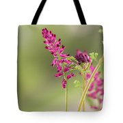 Common Fumitory Tote Bag