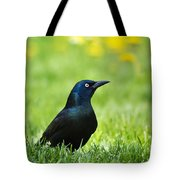 Common Grackle Tote Bag by Christina Rollo