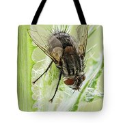Common House Fly 0.9x Tote Bag