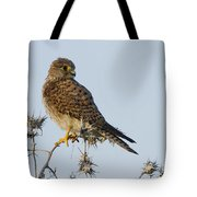 Common Kestrel Falco Tinnunculus 3 Tote Bag
