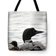 Common Loon And Baby Tote Bag