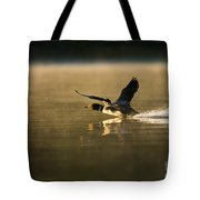 Common Loon Pictures 147 Tote Bag