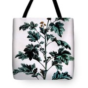 Common Or Garden Feverfew Tote Bag