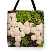 Common Puffball Mushrooms Lycoperdon Perlatum Tote Bag